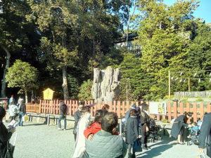 鶴岡八幡宮(大銀杏の木)