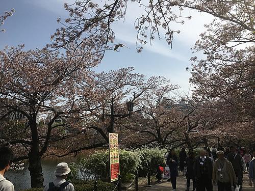 上野へ花見に行きました